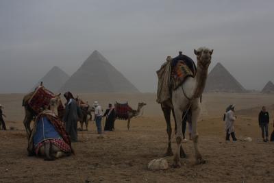 エジプト旅行(5)ギザ&近郊の街編