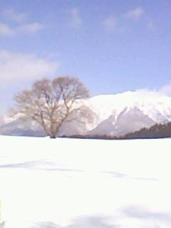 ☆2009年、立春(2/4)の一本桜