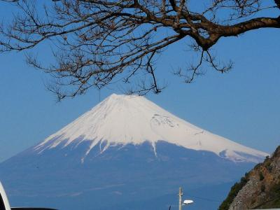 西伊豆で桜と富士山堪能