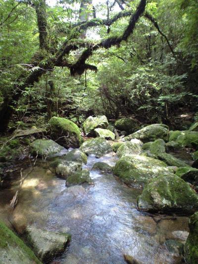屋久島一周の旅vol.1 白谷雲水峡へ