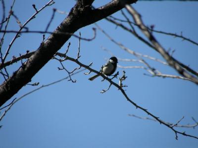 ウォーキングで野鳥観察会に参加