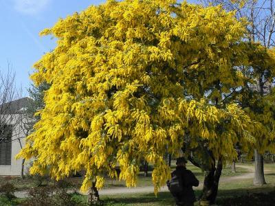 深川界隈 早春の木場公園~清澄庭園