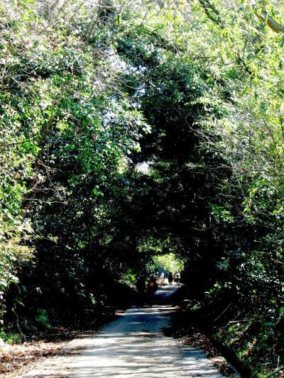 寶龍寺からマザー牧場へハイキング/後半 ☆田園と林間を抜けて