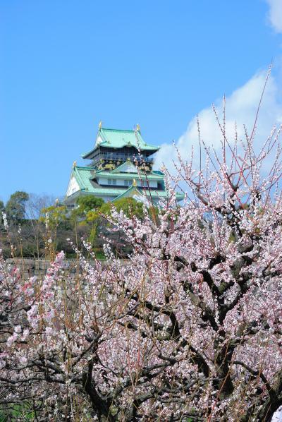 大阪城公園の梅林に行ってきました