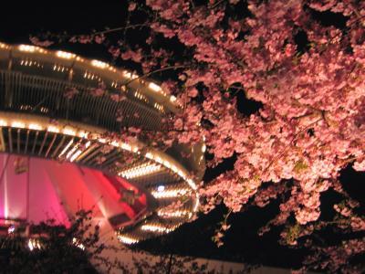 夜桜&イルミネーション なばなの里