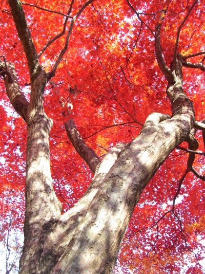 いま逢いに行きます♪(//ω//)【9日目-嵐山・嵯峨野】
