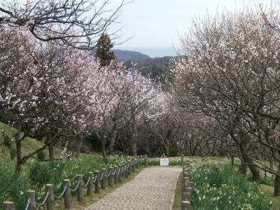 横須賀☆『田浦の梅の里』'09