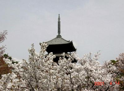 京都府 世界遺産、仁和寺 春の御室桜(名勝)と秋の紅葉