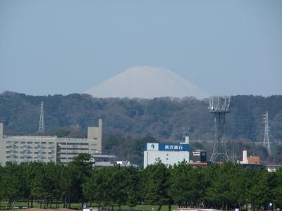 2009年3月 横浜八景島からの富士山とオカメザクラ
