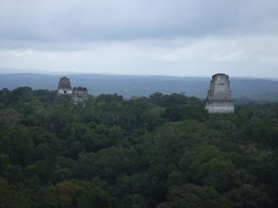 ジャングルの中のティカルTIKAL遺跡