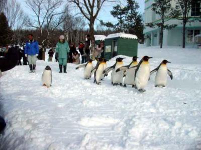 大好きなペンギンに会いに旭山動物園へ