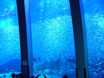 2009年3月 横浜八景島アクアミュージアムのイワシの大群