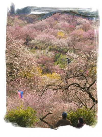 御岳渓谷ハイキングと吉野梅郷めぐり<御岳渓谷~玉堂美術館~吉川英治記念館~梅の公園>