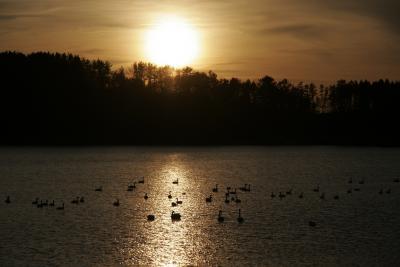 白神、小友沼の渡り鳥、ふるさとへ帰る