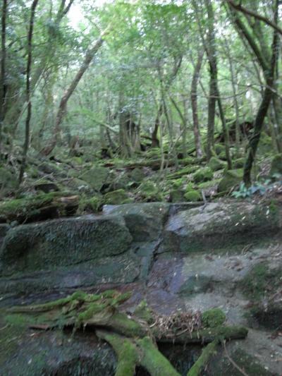 神秘の森 (後編)