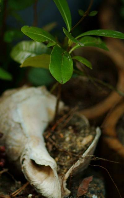 里海画報~豊島の里海盆栽