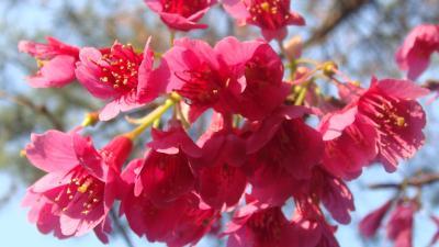 別荘地内に咲く花。