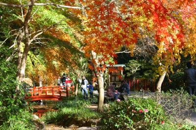 紅葉の奥湯河原と香り漂うみかんの郷ウォーキング