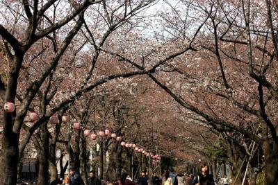 2009年の桜 浮間公園(3/27)