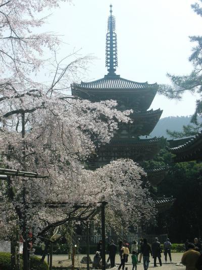 2008 京の桜巡り ? 【 醍醐寺の枝垂れ桜は圧巻です!】