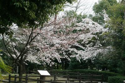2009春、桜の季節の岩崎城(3):4月1日(3):隅櫓礎石、染井吉野、椿、岩崎城1階展示室、模擬天守からの眺望
