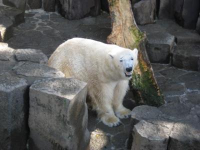 上野動物園の無料開園日