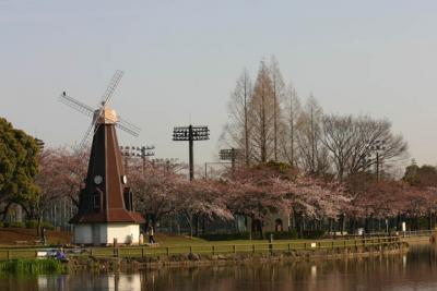 【その後】2009年の桜 浮間公園 04/03