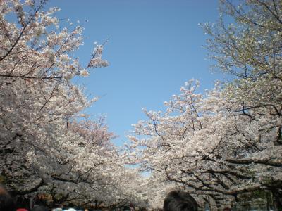 お花見~上野公園♪