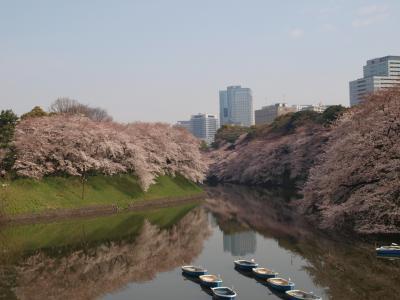 2009.04 桜吹雪の江戸城散歩? 千鳥ヶ淵・北の丸公園