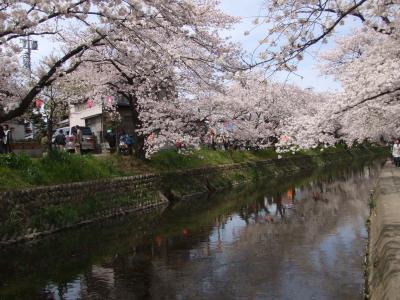 五条川*桜まつり*