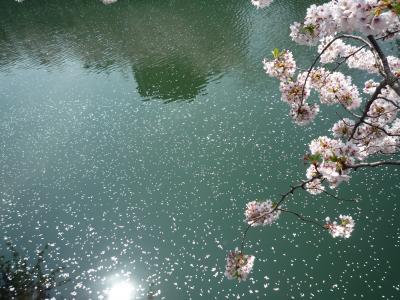 週末、東京お花見めぐりをしてきました