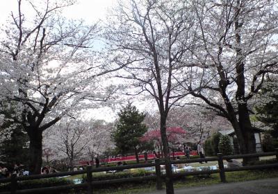 岩槻城址公園は桜のトンネル