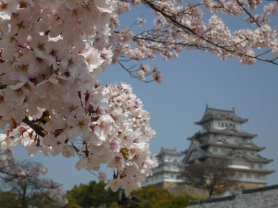 桜に彩られた姫路城
