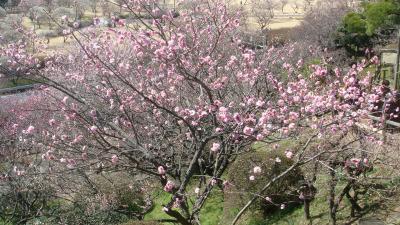 偕楽園梅祭り