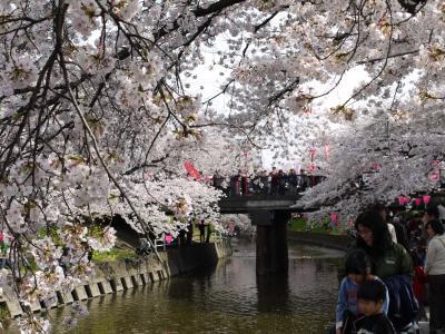2009岩倉桜まつり
