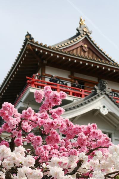 2009春、桜の季節の清洲城(4):4月5日(4):江戸時代の城跡保存、明治・大正時代の城跡保存、紅白の八重桜、大手門