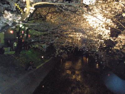 日本さくら名所百選【4】 五条川