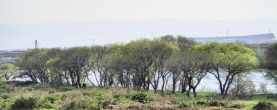 春の長良川河川敷
