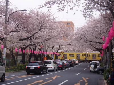 桜がきれいな中野