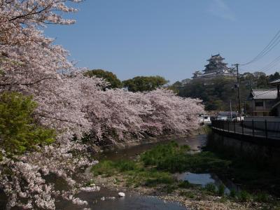 2009桜便り 再び姫路城、そしてお城周辺の穴場紹介