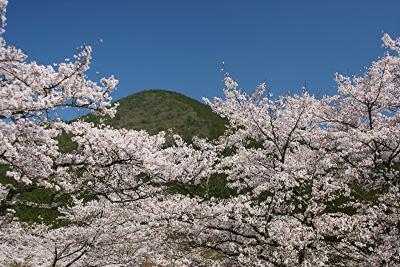 関西遊歩 #4 春うらら~丹波少年自然の家の桜(丹波市青垣町)