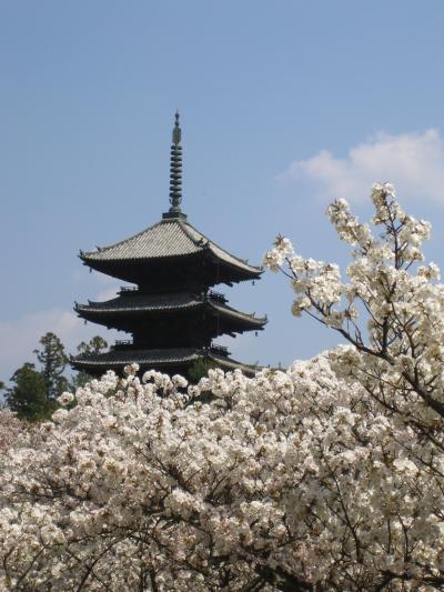 Go!市バスGo!! ~2009春~ [其の壱:わたしゃお多福、御室の桜。]