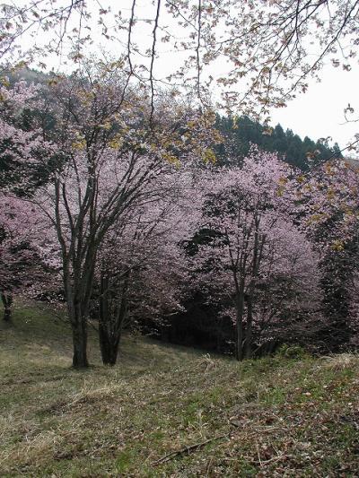 09  花巡り・・・?秩父・美の山に春を感じて歩く