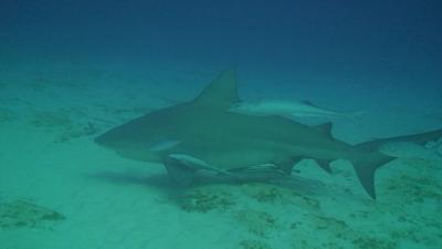 サメとダイビング
