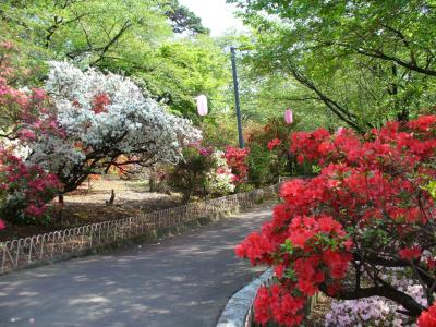 2009年04月 ツツジの華蔵寺公園・・・色とりどりです