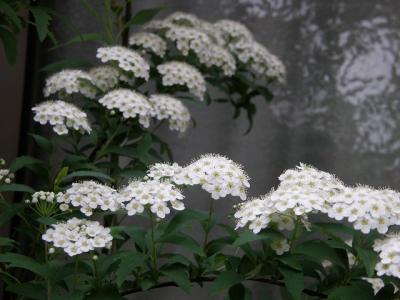 09  花巡り・・・?我が家の庭に咲く花・・・その3