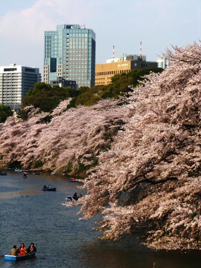 桜満開の千鳥ヶ淵緑道から北の丸公園へ ☆超混雑地帯の静寂感を