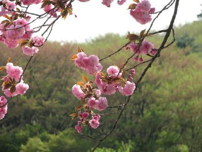 春の森の妖精を求めての美の山・長瀞ハイキング?長瀞・野土山