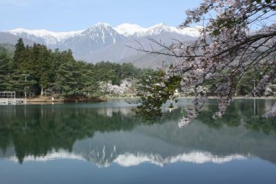 南信州の桜?(千人塚公園)