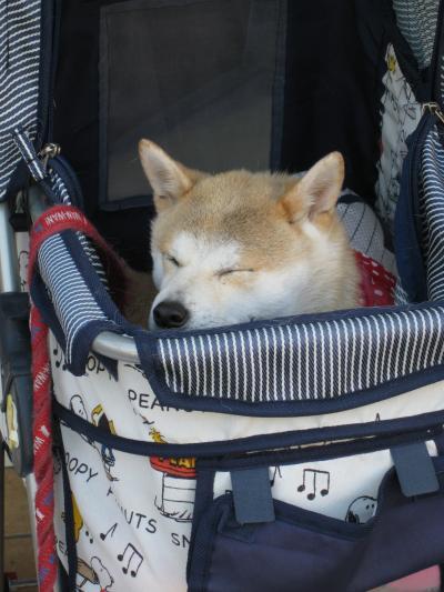 ♪癒し犬♪